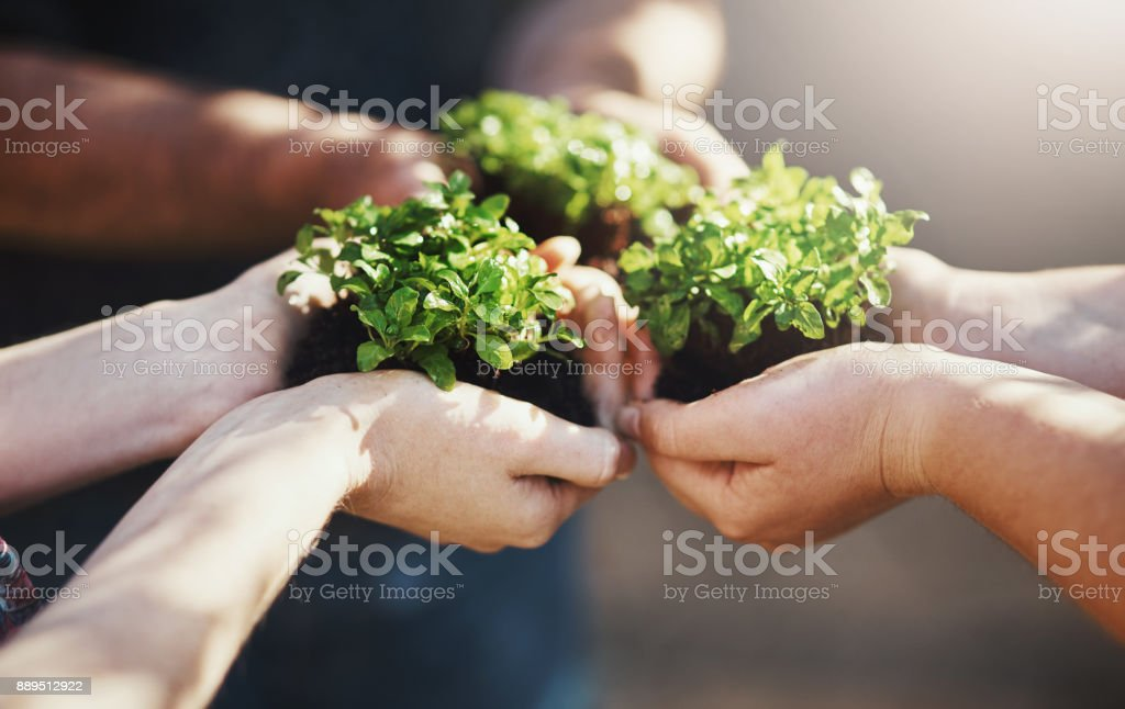 Potential for growth is possible when it's done together stock photo