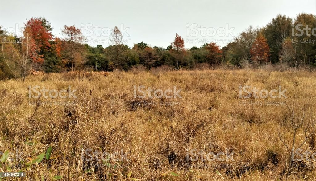 Pothole Marsh in Early Winter stock photo