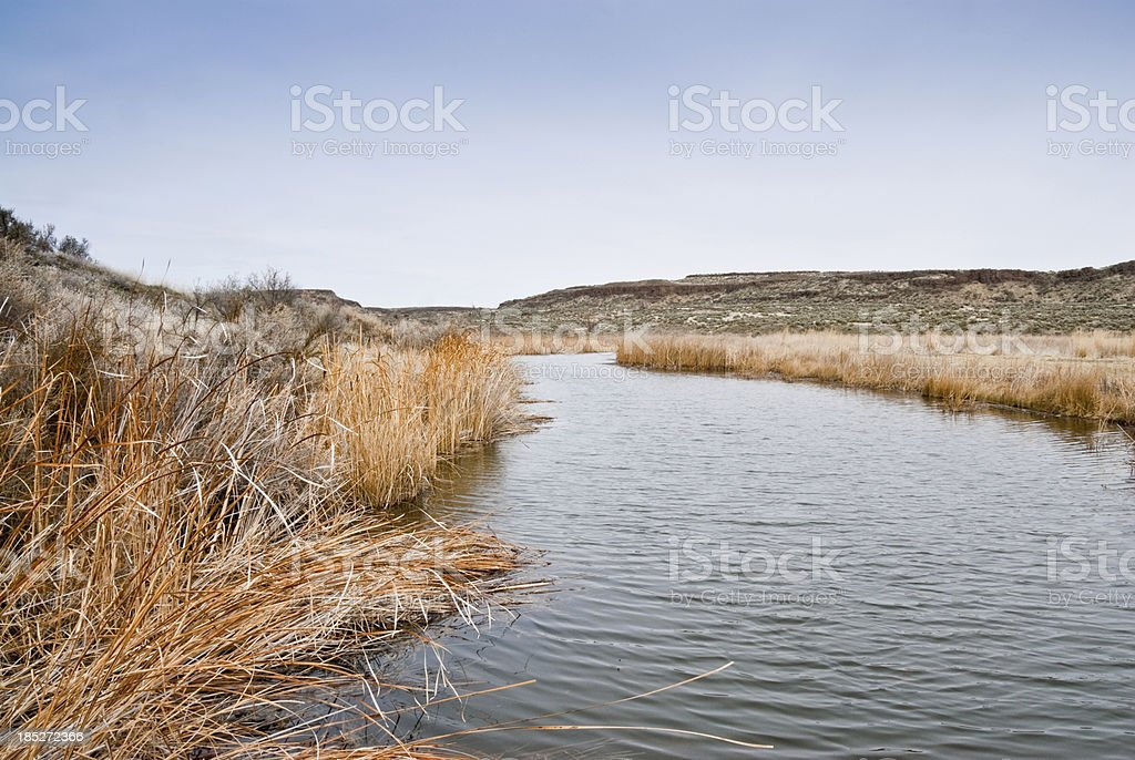 Pothole Marsh Surrounded by Dead Grasses royalty-free stock photo