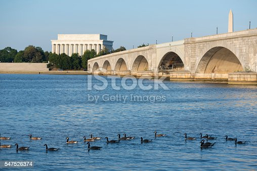 Canadian geese float on the Potomac River in Washington DC. Behind them are the Arlington Memorial Bridge and Lincoln Memorial.