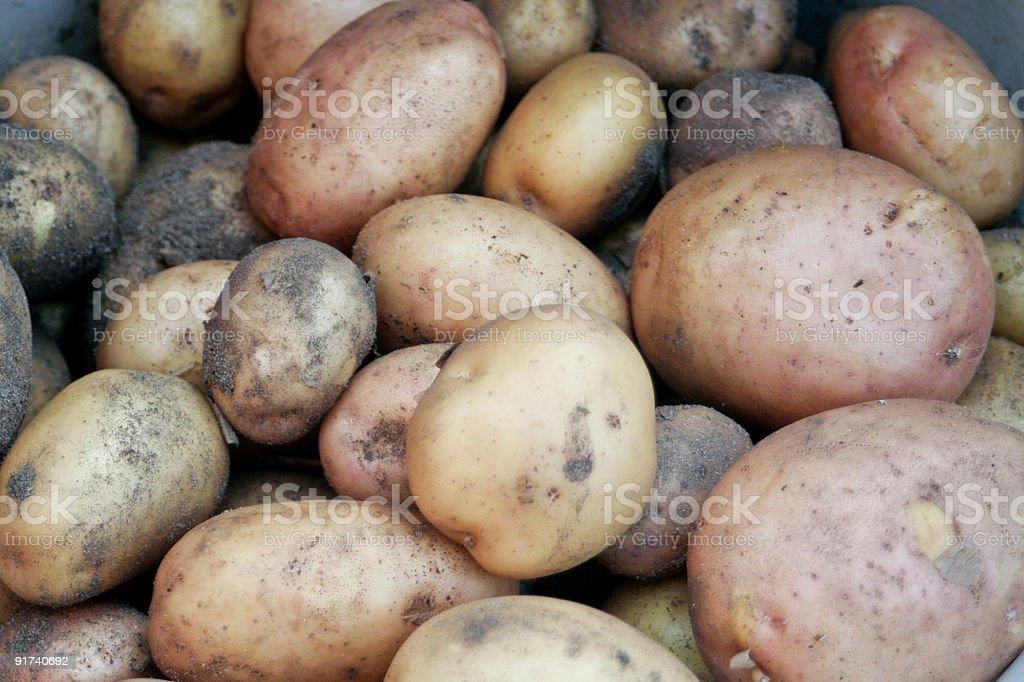 Pototoes royalty-free stock photo