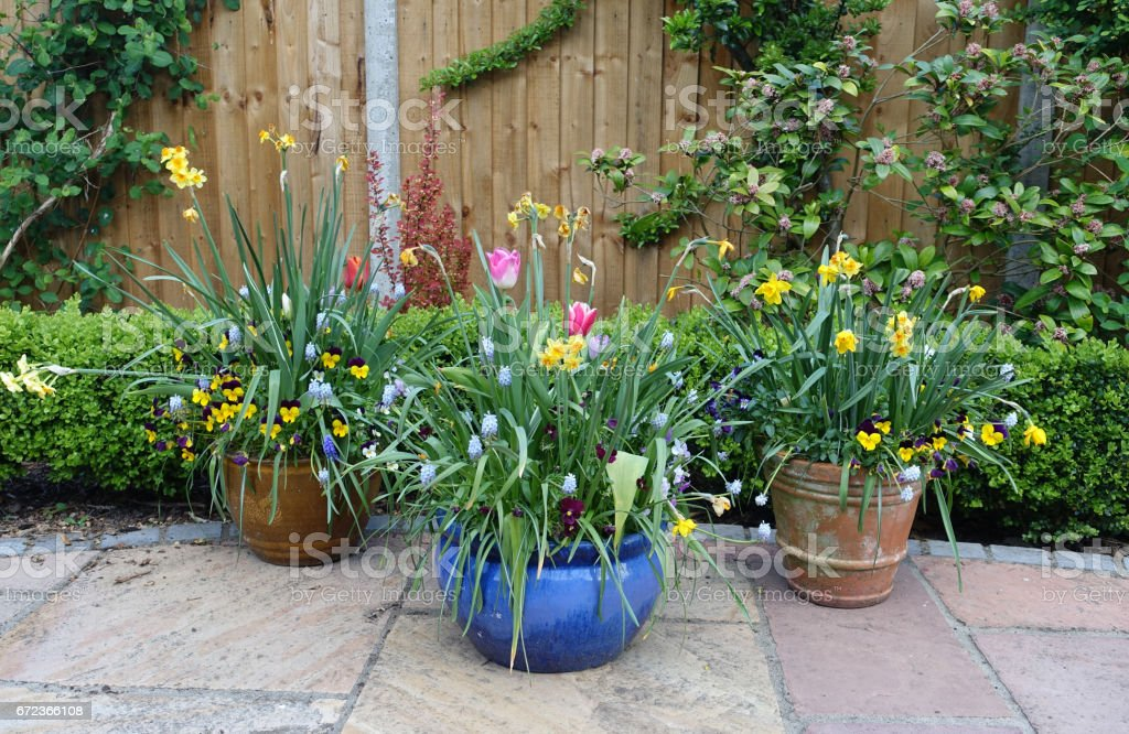 Pots containing spring flowers on a patio – Foto