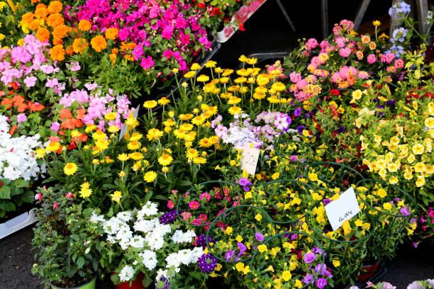 töpfe mit blumen auf die floristen-markt - günstig nach amsterdam stock-fotos und bilder
