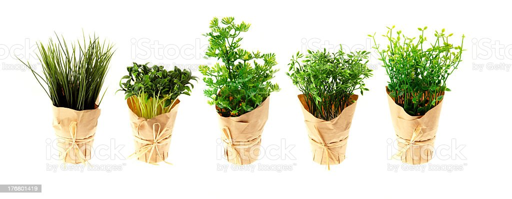 Pots of Growing Herbs Isolated on White XXL stock photo