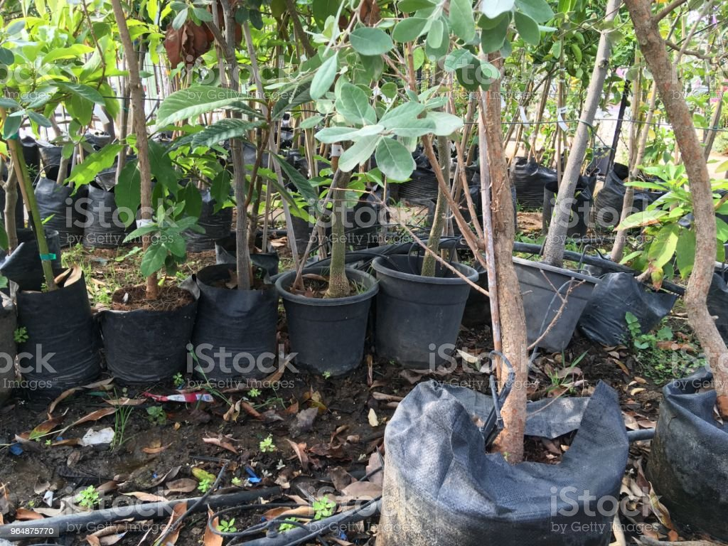 Pots with flowers for a transplant in a flower shop. royalty-free stock photo