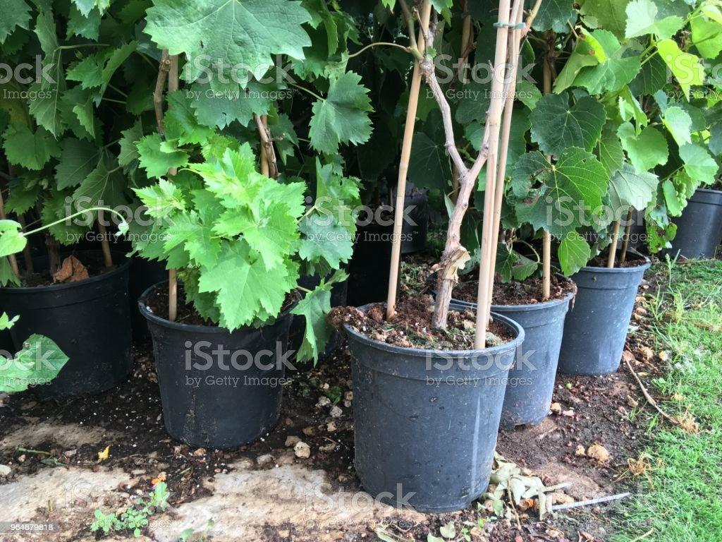 花店裡有花做移植的花盆。 - 免版稅以色列圖庫照片