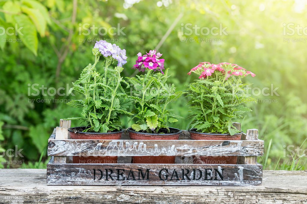 Pots with flowers in wooden box on log, outdoor garden stock photo