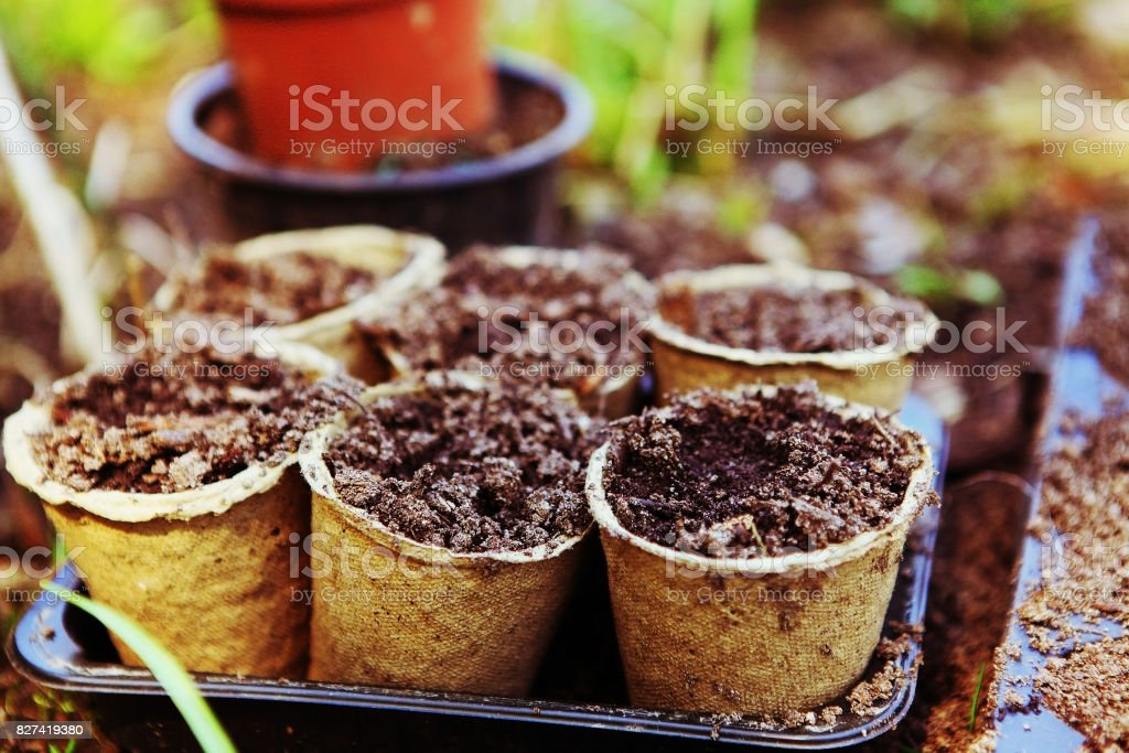 pots with soil for garden sprouts on the spring outdoor country stock photo