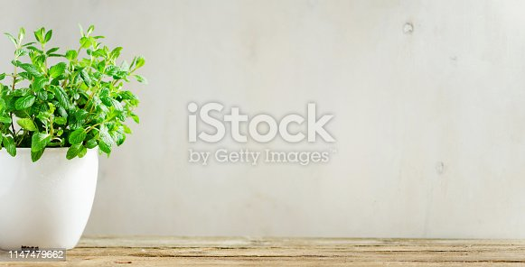 istock Potted basil plant. Banner. Vegan, clean eating and growth concept. Fresh green basil herb in white flowerpot on wooden background with copy space. 1147479662