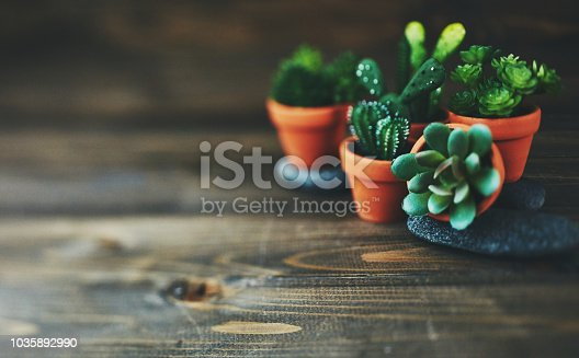Potted cacti and succulent plants on rustic wood table