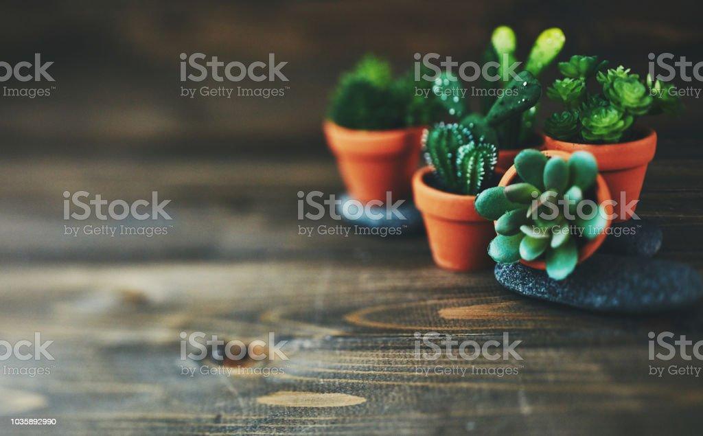 Eingemachte Kakteen und Sukkulenten auf rustikalen Holztisch – Foto