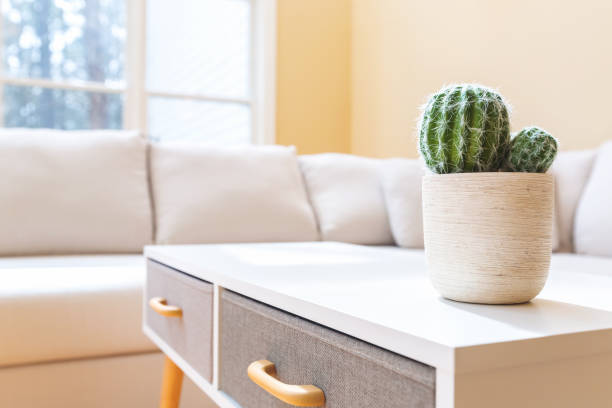 potted cactus in a large home - coffee table imagens e fotografias de stock