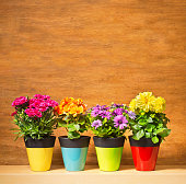 Four potted flower seedling plants planted in colorful pots. Including Carnation, Begonia, Osteospermum and Dahlia. They are lined up in a horizontal row against a rustic wood background designed for custom copy. Photographed in square format with copy space