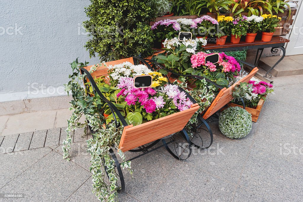 Potted flowers on showcase near the flower shop. stock photo