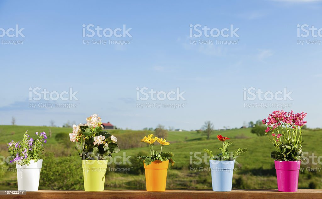 Potted flowers royalty-free stock photo