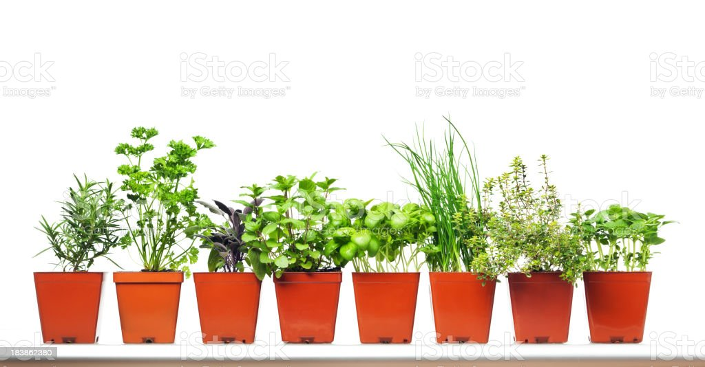 Potted Garden Herbs in Retail Plastic Container on White Background royalty-free stock photo