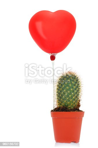 istock Potted green cactus 960156702