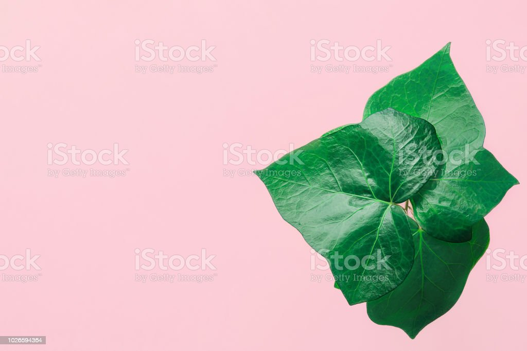 Potted Green Ivy Leaves On Pink Background Urban Jungle Banner Poster Template For Women