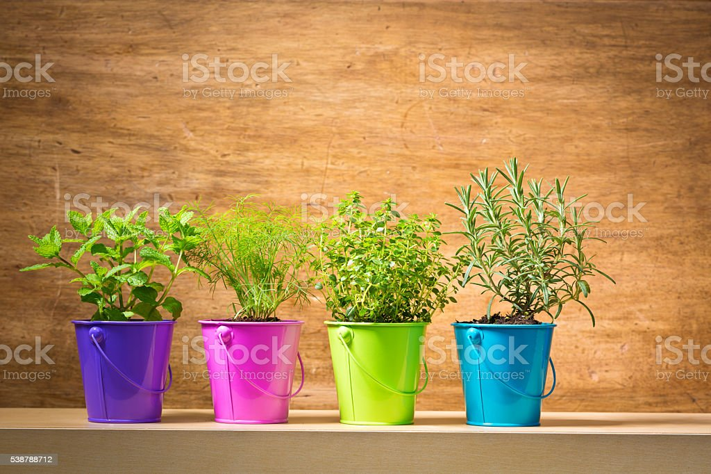 Potted Herb Garden Seedling Plants in Blank Background stock photo