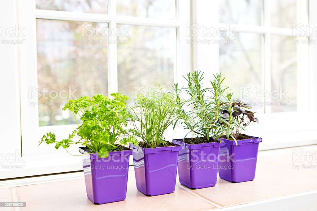 Potted Herb Garden Seedling Plants with Window Background stock photo