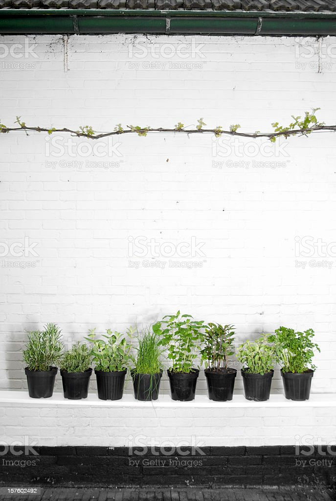 Potted Herbs royalty-free stock photo