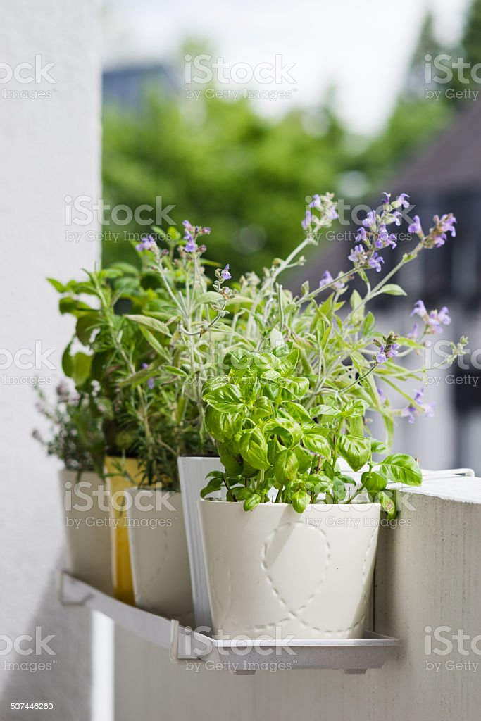 Potted italian aromatic herbs at balcony stock photo