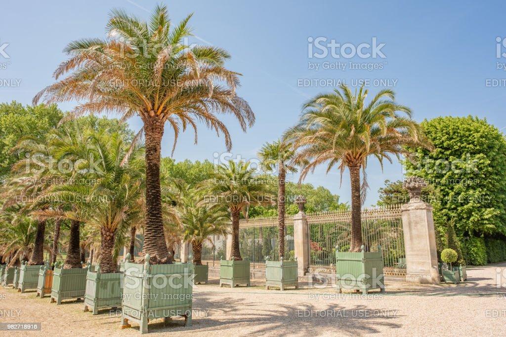 Paleis Van Versailles Tuin.Ingegoten Palmbomen In De Schilderachtige Tuinen Buiten Het Paleis