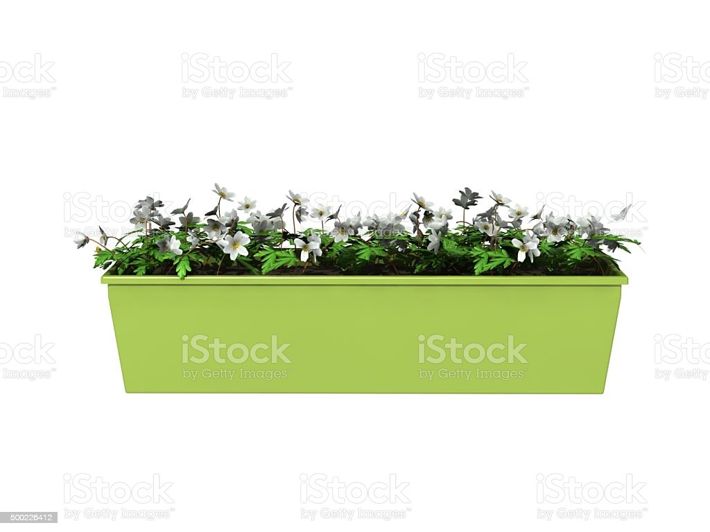 potted plant flowers stock photo