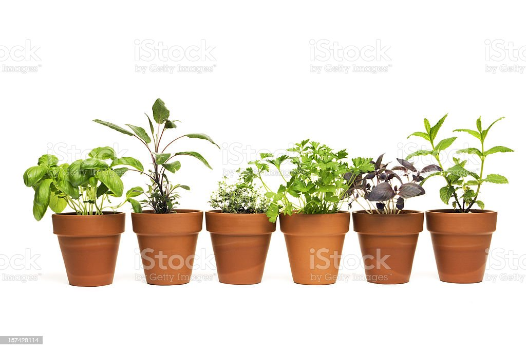 Potted Plant Herb Spice Garden in Spring Flower Pot Containers royalty-free stock photo