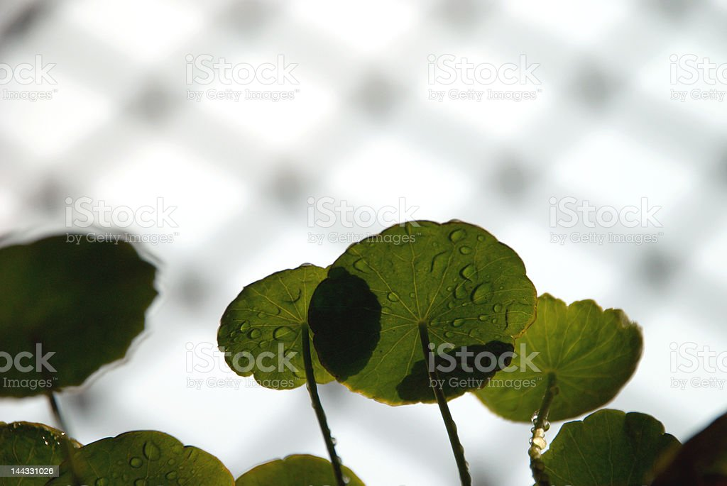 potted plant royalty-free stock photo