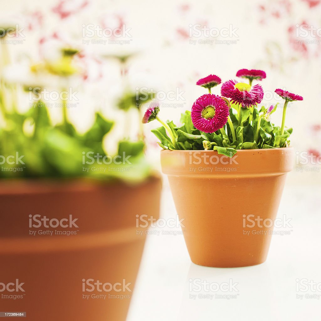 Potted plants flowers royalty-free stock photo