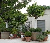A group of potted plants arranged on the street, in front of the residential building