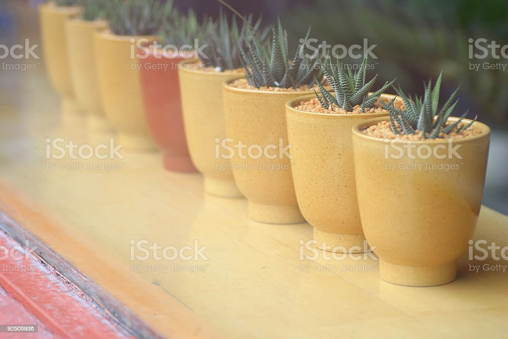 Potted plants on a windowsill royalty-free stock photo