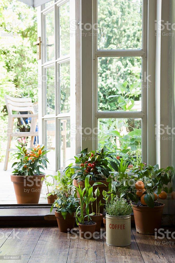 Potted Plants On Hardwood Floor stock photo