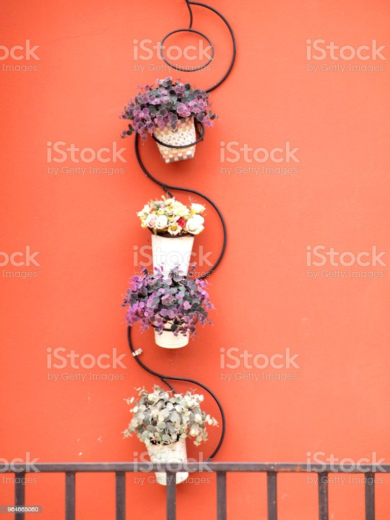 potted plants royalty-free stock photo
