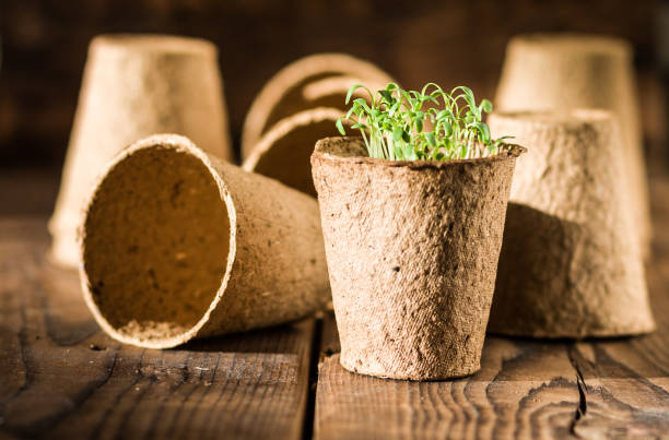 potted seedlings growing in biodegradable peat moss - biodegradabile foto e immagini stock