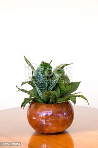 Potted snake plant on a wood table; white background with plenty of copy space at the top of the frame.