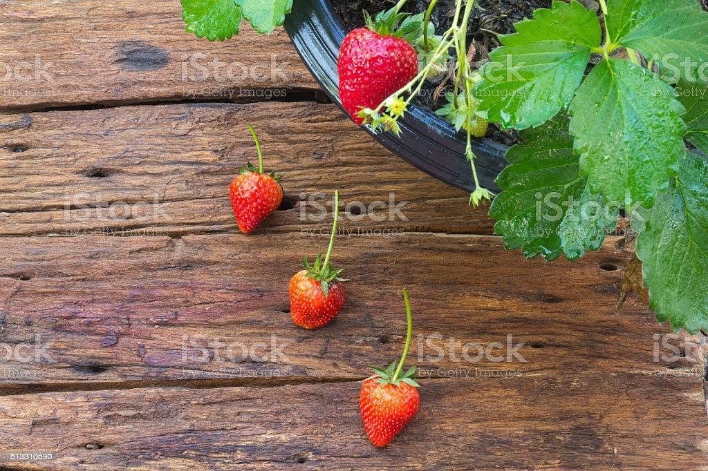 Topfpflanze Erdbeere auf hölzerner Hintergrund – Foto