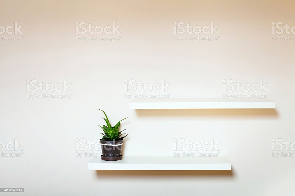 Potted succulent on a white shelf on a white wall stock photo