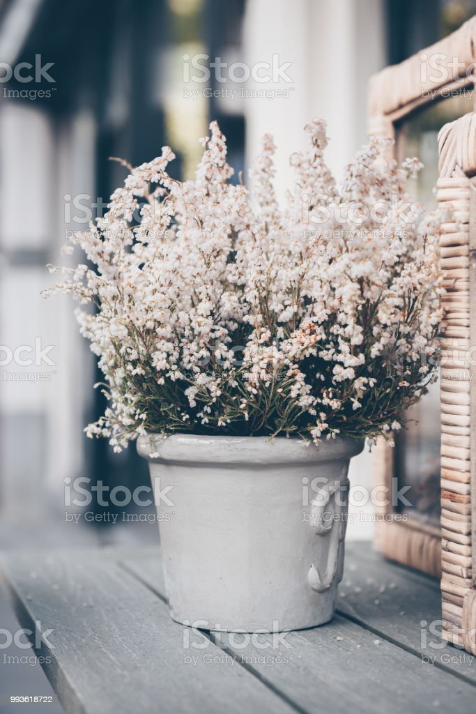 Potted white heather flowers outdoors stock photo more pictures of potted white heather flowers outdoors royalty free stock photo mightylinksfo