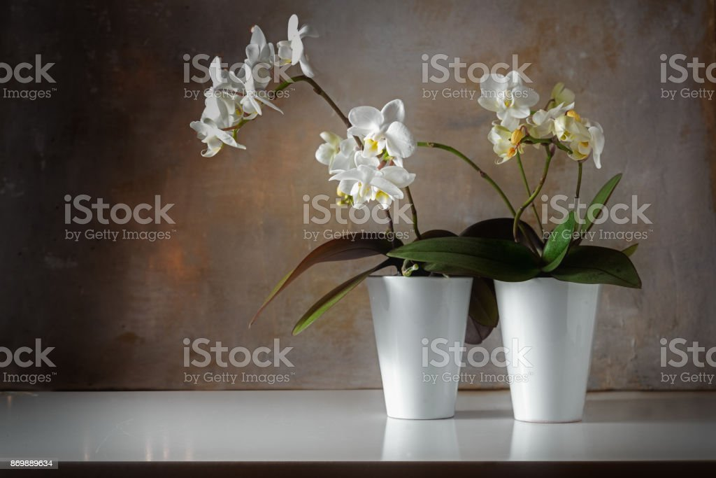potted white orchids (Phalaenopsis) on a shiny sideboard in front of a rough vintage wall, decoration with contrast between old and modern, copy space stock photo
