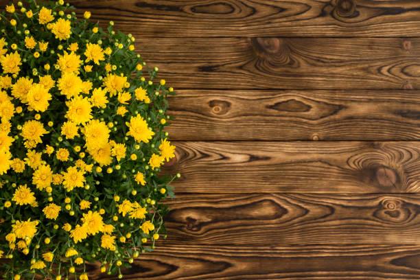 ingemaakte gele chrysant op een rustieke tafel - chrysant stockfoto's en -beelden