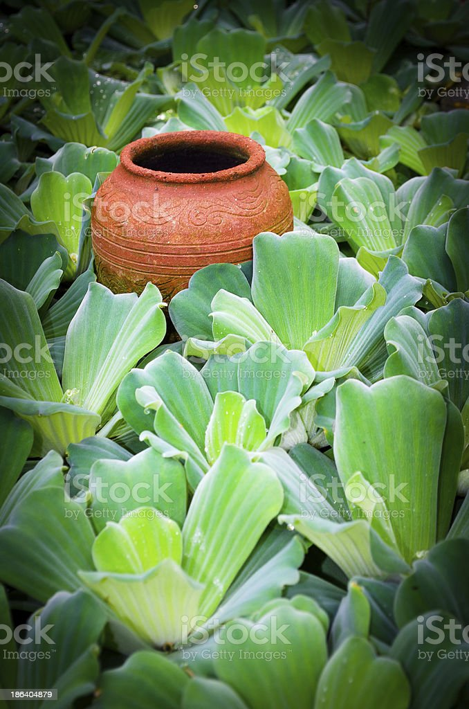 Pottery in Thailand pond. royalty-free stock photo