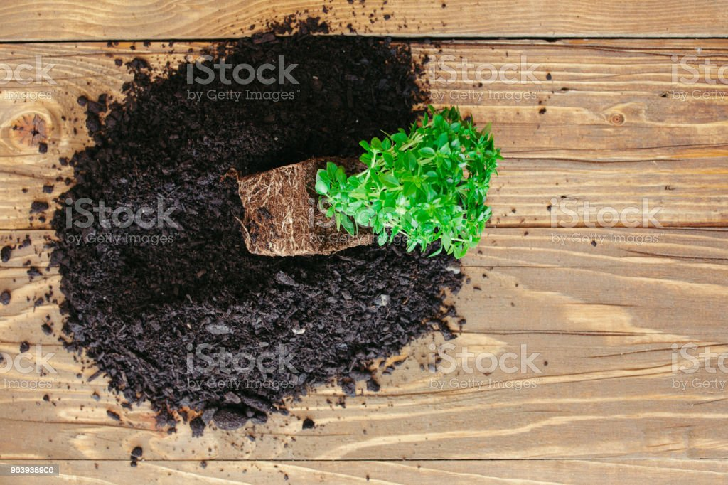 Potting a plant - Royalty-free Beginnings Stock Photo