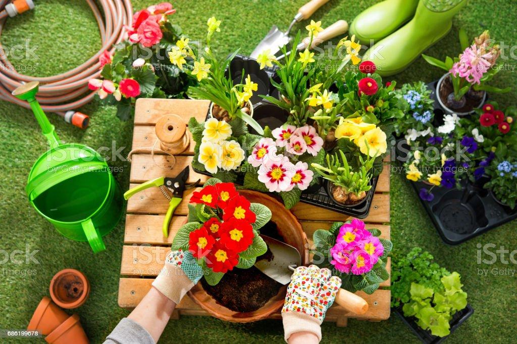 Mise en pot de fleurs dans le jardin photo libre de droits