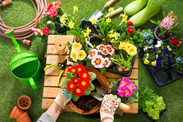 Potting flowers in the garden stock photo