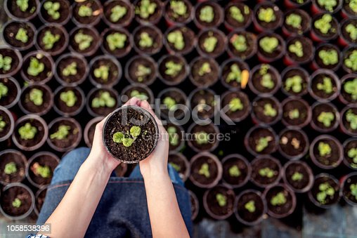 Photo of Unrecognizable Woman planting seedlings in cups in greenhouse, upper view. Woman's hands touching plant. In early spring preparations for the garden season.
