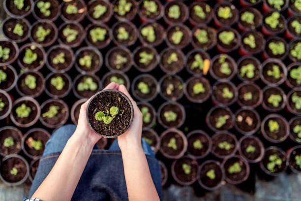 potting flowers - оранжерея стоковые фото и изображения