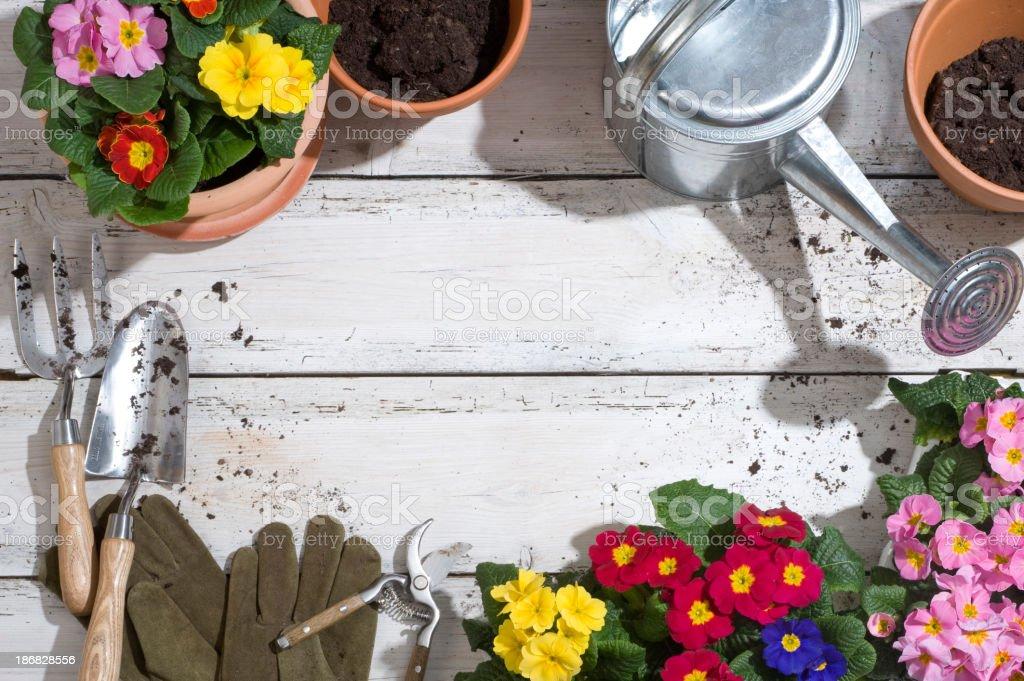 Potting plants royalty-free stock photo