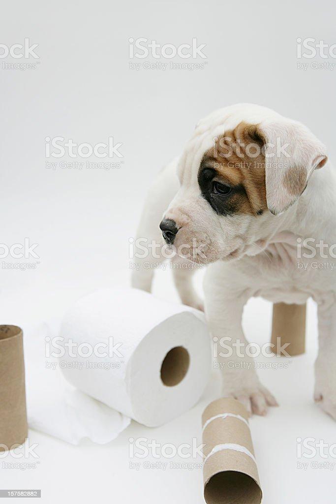 Potty Training Vertical royalty-free stock photo